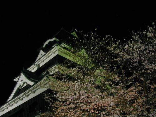 熊本城夜桜
